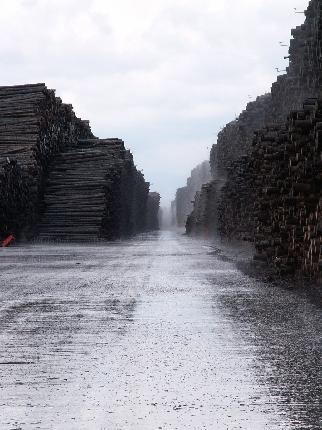 Svezia, un tesoro ancora tutto da sfruttare gli alberi abbattuti 7 anni fa dalla tempesta Gudrum