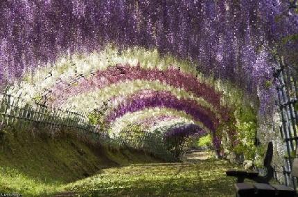 In Giappone esplode la primavera, le foto del parco botanico di Tochigi