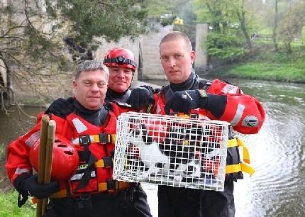 Intrappolato alla base di un ponte, gatto salvato dai vigili del fuoco