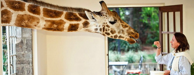 Giraffe Manor, il parco dove le giraffe sono di casa