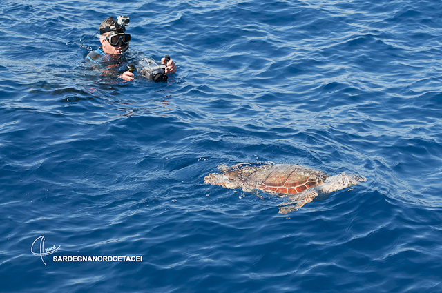 Acquario di Cala Gonone partecipa al progetto Sardegna Nord cetacei ...