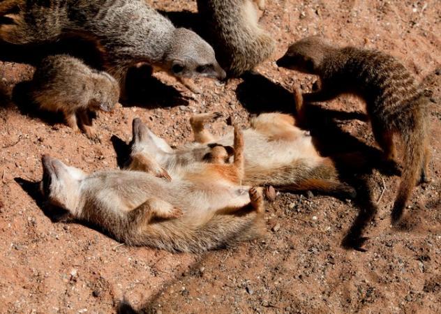 Estate bestiale:  ecco come gli animali riescono a convivere con le alte temperature