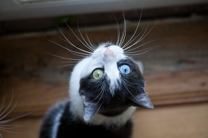 Dal gufo al cane passando per il gatto ecco una serie di for Gatti con occhi diversi