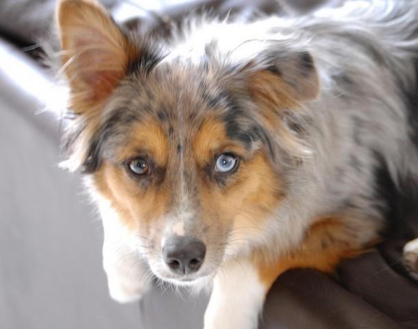 Dal gufo al cane passando per il gatto ecco una serie di - Occhi colori diversi ...