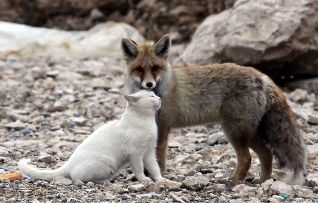 Il gatto e la volpe, insoliti amici sulle rive del lago di Van