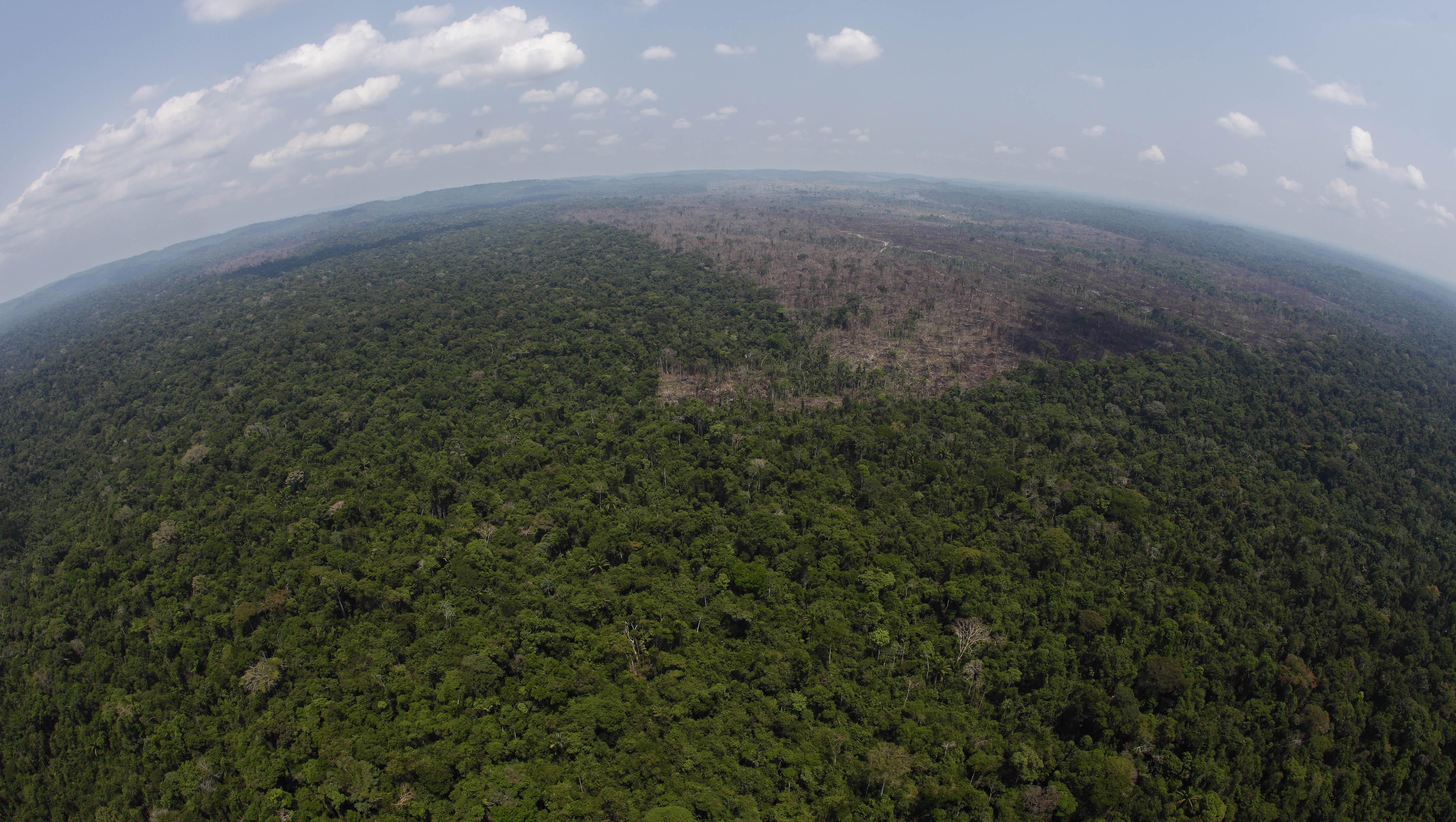 Paraguay, indigeni Ayoreo protestano contro disboscamento foresta vergine